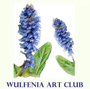 wulfenia art club